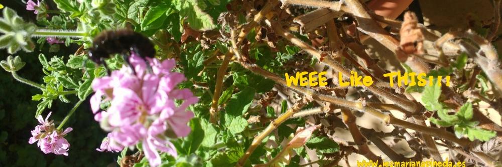 weeeabeja